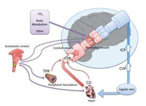 Cerebral autoregulation