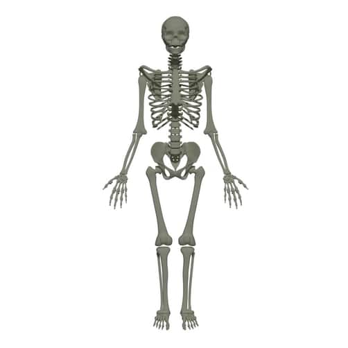 types of bones anatomy
